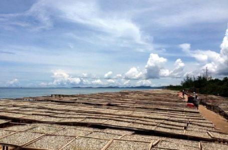 Cạn kiệt nguồn cá cơm, nước mắm Phú Quốc sẽ ra sao?